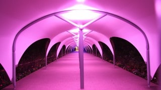 illuminated Walkway