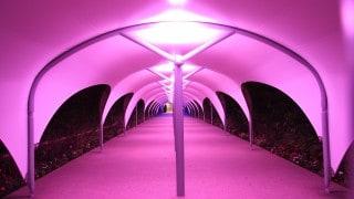 illuminated Walkway